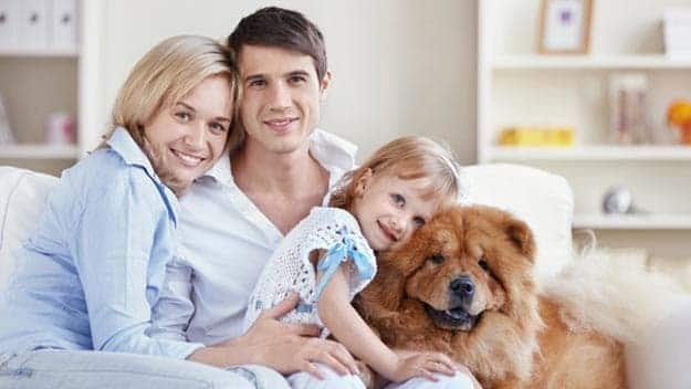 Wills & Trusts dog-young-family Direct Wills Allesley